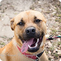 Adopt A Pet :: Duke - Daleville, AL