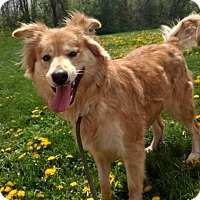 Adopt A Pet :: Shay *Not in Rescue Yet* - Guelph, ON
