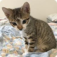 Adopt A Pet :: Riddle - North Highlands, CA
