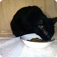 Adopt A Pet :: Lucky - Harrisonburg, VA