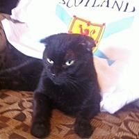 Adopt A Pet :: Macgregor - St. Louis, MO