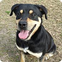 Adopt A Pet :: Dixie - Claxton, GA