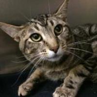 Adopt A Pet :: Willie - Lynnwood, WA