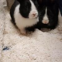 Adopt A Pet :: Pammy - Kansas City, MO