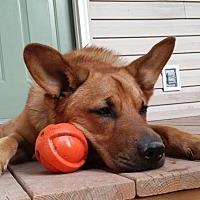 Adopt A Pet :: Madrid - Morrisville, NC
