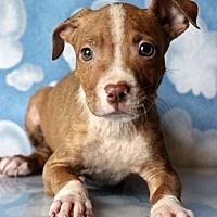 Adopt A Pet :: Zion - Waldorf, MD