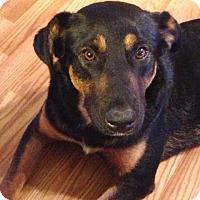 Adopt A Pet :: Roonie - Hagerstown, MD