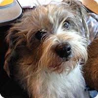 Adopt A Pet :: Molly - (Pending Adoption) - Quentin, PA