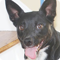 Adopt A Pet :: Kya - Chapel Hill, NC