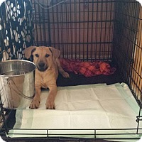 Adopt A Pet :: Barney - Fayette City, PA