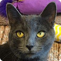 Adopt A Pet :: Aurora - Winchester, CA