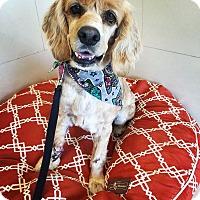 Adopt A Pet :: Meadow - Orange, CA