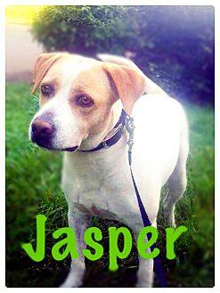 Labrador Retriever Mix Dog for adoption in Williamsburg, Virginia - Jasper