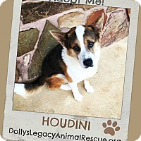 Adopt A Pet :: HOUDINI - Lincoln, NE