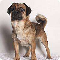 Adopt A Pet :: Bob - Gardena, CA