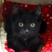 Adopt A Pet :: Wyatt - Belleville, MI