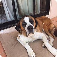 Adopt A Pet :: Bertie - San Diego, CA