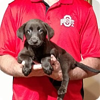 Adopt A Pet :: Hope - South Euclid, OH