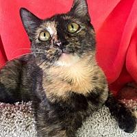 Adopt A Pet :: Aubrey - Bloomsburg, PA