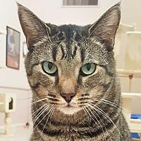 Adopt A Pet :: Lupy - McPherson, KS