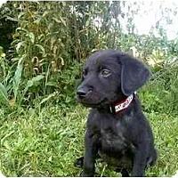 Adopt A Pet :: Taz - Newport, VT
