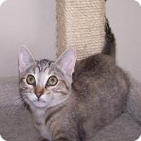 Adopt A Pet :: K-Mellon-Honeydew - Colorado Springs, CO