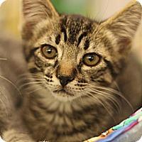 Adopt A Pet :: Jinx - Sacramento, CA