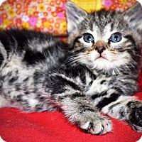 Adopt A Pet :: Colby - Xenia, OH