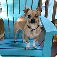 Adopt A Pet :: Perky - Nashville, TN