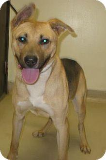 German Shepherd Dog Mix Dog for adoption in Gary, Indiana - Shemp