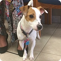 Adopt A Pet :: Riley in Houston, TX - Houston, TX