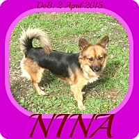 Adopt A Pet :: NINA - White River Junction, VT