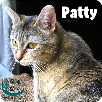 Domestic Shorthair Cat for adoption in Huntsville, Ontario - Patty - Mama of the Year!