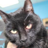 Adopt A Pet :: Buckaroo - Robinson, IL
