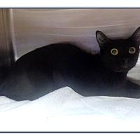 Adopt A Pet :: GIPSY - Marietta, GA