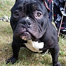 Adopt A Pet :: Jackson ADOPTED
