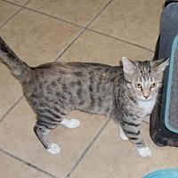 Adopt A Pet :: Pepsi - Lacon, IL