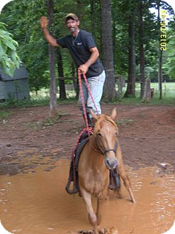 Tennessee Walking Horse Mix for adoption in York, South Carolina - Bambi