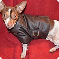 Adopt A Pet :: CHUCKY - Brooksville, FL