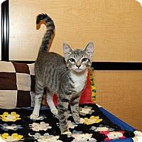 Adopt A Pet :: Jazzy - Farmingdale, NY