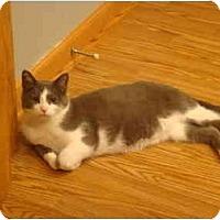 Adopt A Pet :: Moochie - Muncie, IN