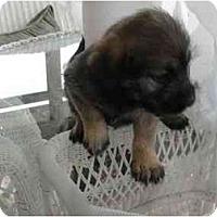 Adopt A Pet :: Cassie - Glastonbury, CT