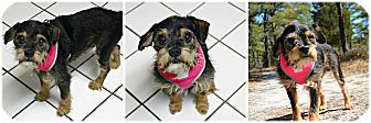 Terrier (Unknown Type, Small) Mix Dog for adoption in Forked River, New Jersey - Tramp