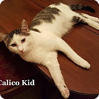 Adopt A Pet :: Calico Kid - Bentonville, AR