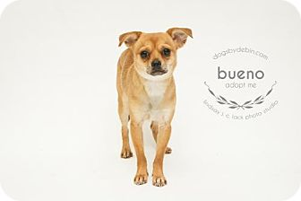Chihuahua/Terrier (Unknown Type, Medium) Mix Dog for adoption in Kansas City, Missouri - Bueno