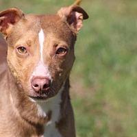Adopt A Pet :: Mr. Peanut - McKenzie, TN