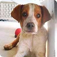 Adopt A Pet :: Hercules - Lincolnton, NC