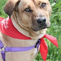Adopt A Pet :: Herman - Washington, DC