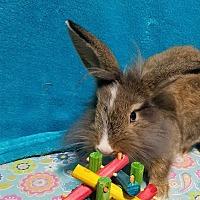 Adopt A Pet :: Beatrix - Los Angeles, CA