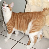 Adopt A Pet :: Nick -Adoption Pending! - Colmar, PA